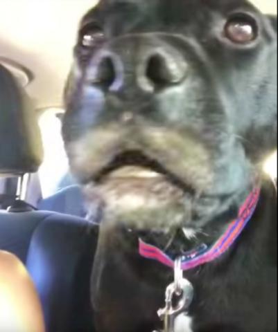 quello-che-fa-Doggo-quando-scopre-dove-sta-andando 2
