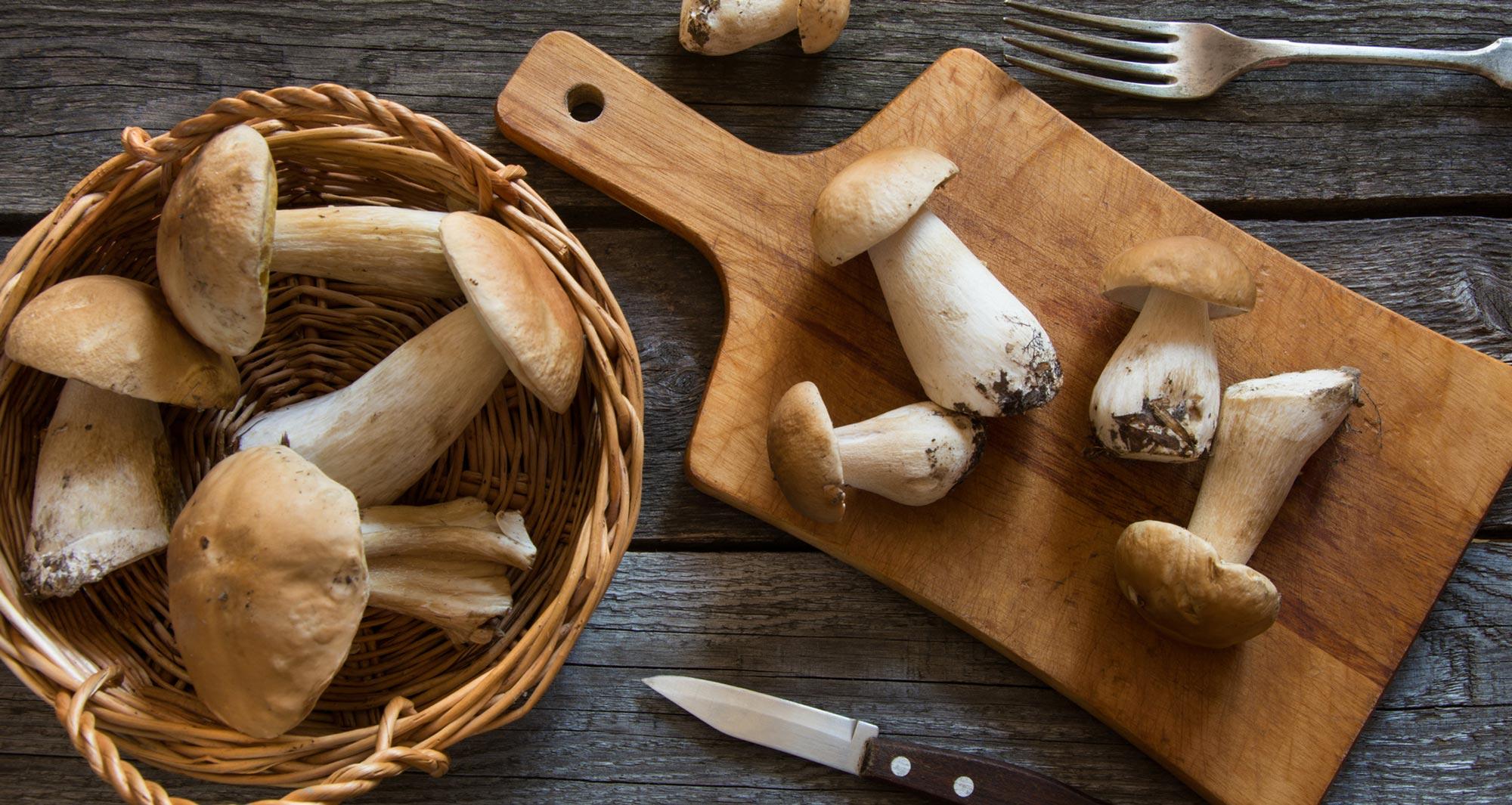 funghi-5-miti-da sfatare