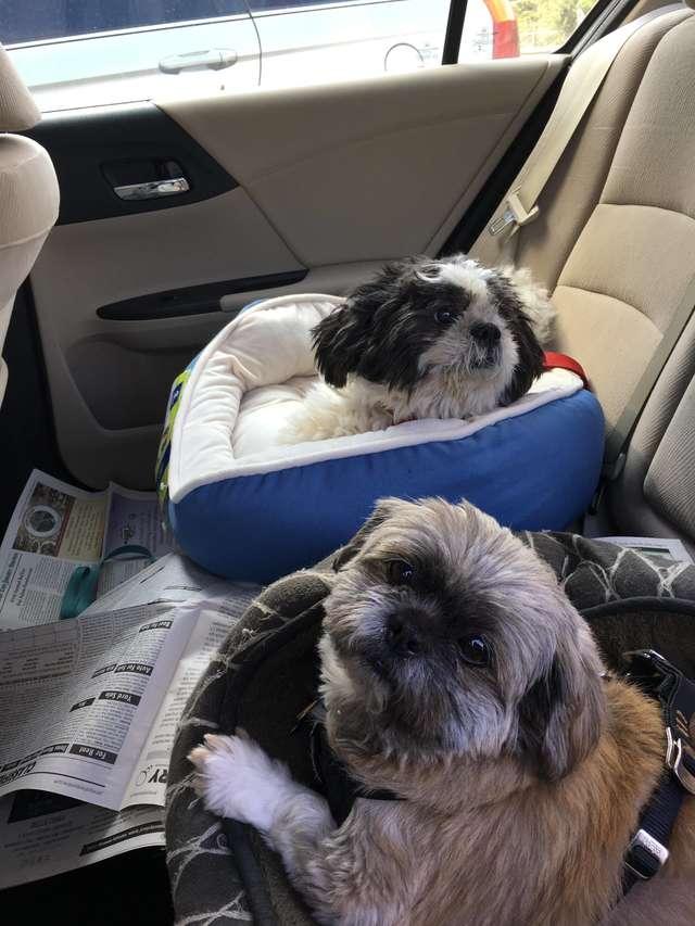 Baxter e Charlie