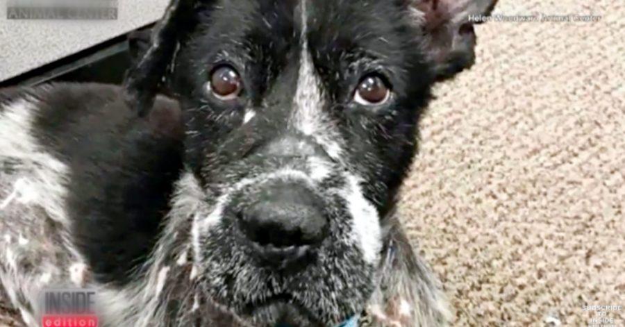 cane con la bocca legata