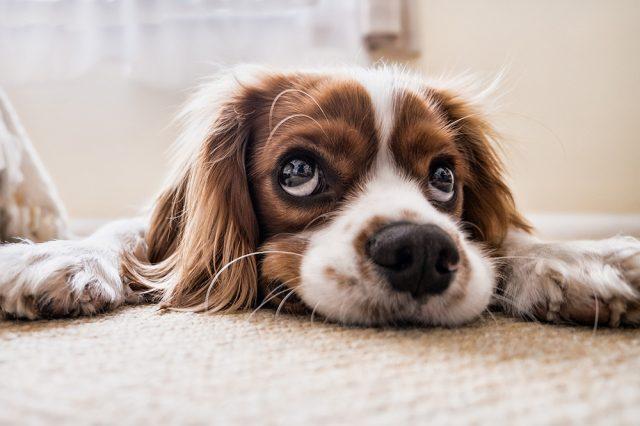cane-che-non-mangia