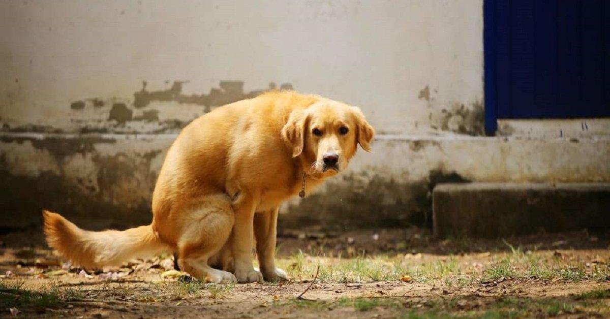 Perché il cane gira su sé stesso quando fa i bisogni?