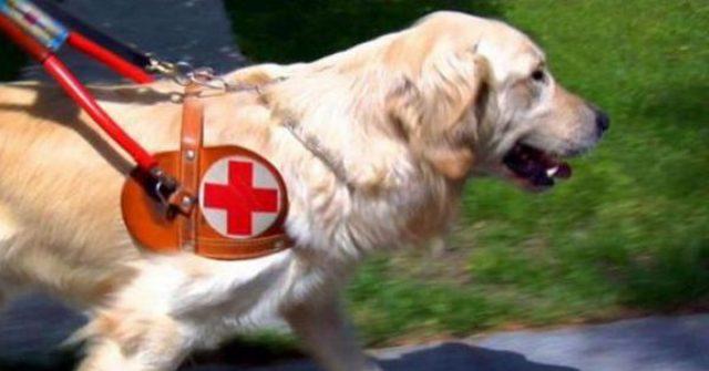 cane-guida-per-ciechi