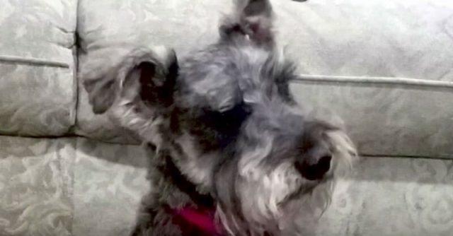 cane-perde-la-vita-a-causa-di-un-gioco-molto-comune4