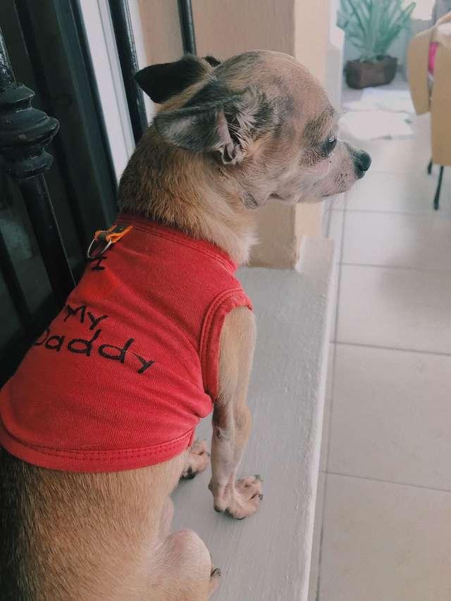 Paquito il Chihuahua triste