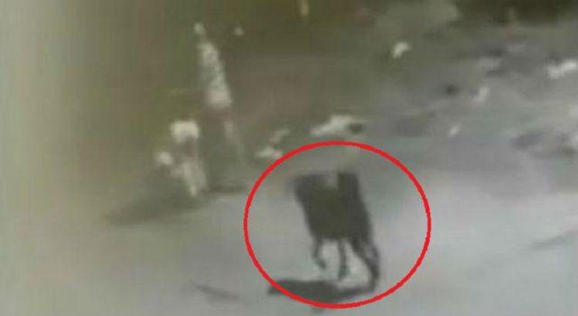 cane-salva-donna-da-un-uomo-che-voleva-violentarla