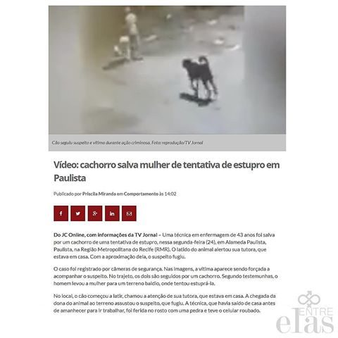 cane-salva-donna-da-un-uomo-che-voleva-violentarla2