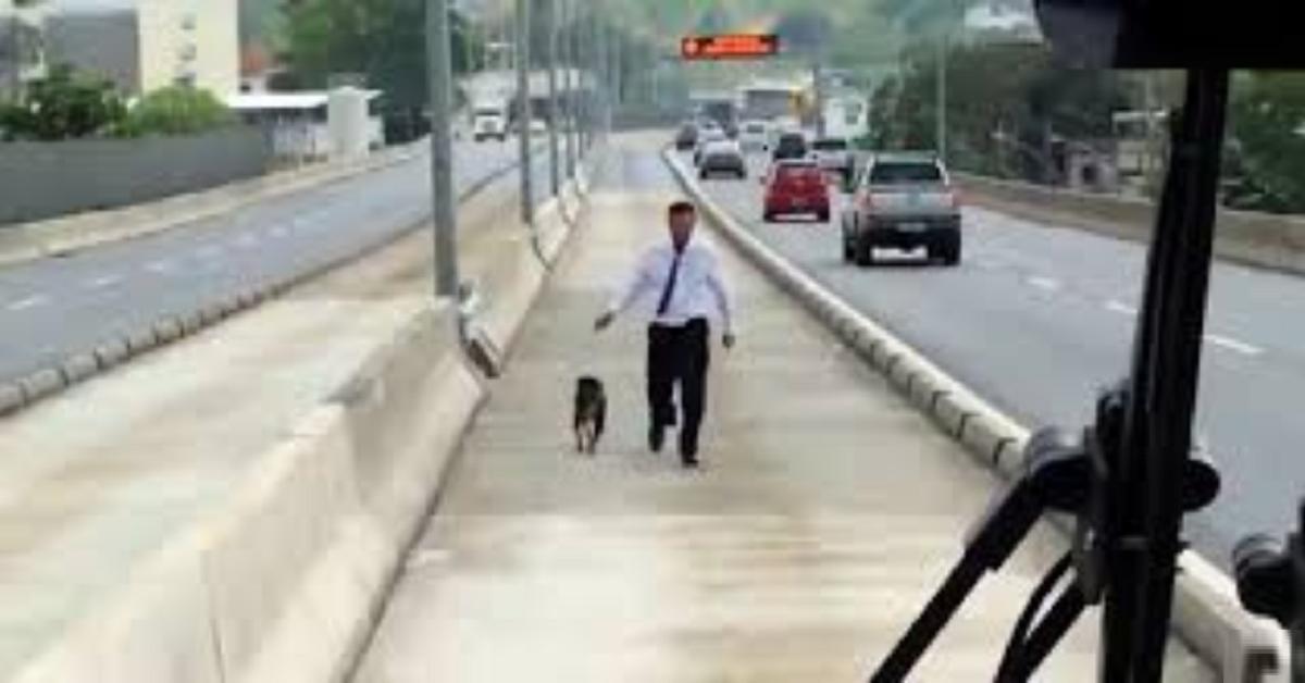 cane-salvato-in-autostrada-da-un-autista-di-pullman