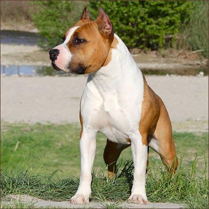 cane-si-difende-dai-suoi-morsi-mordendogli-le-parti-basse1