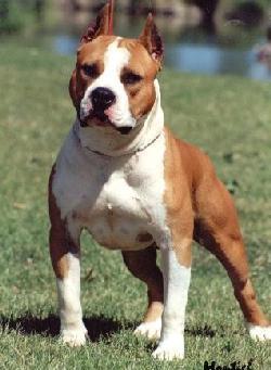 cane-si-difende-dai-suoi-morsi-mordendogli-le-parti-basse4