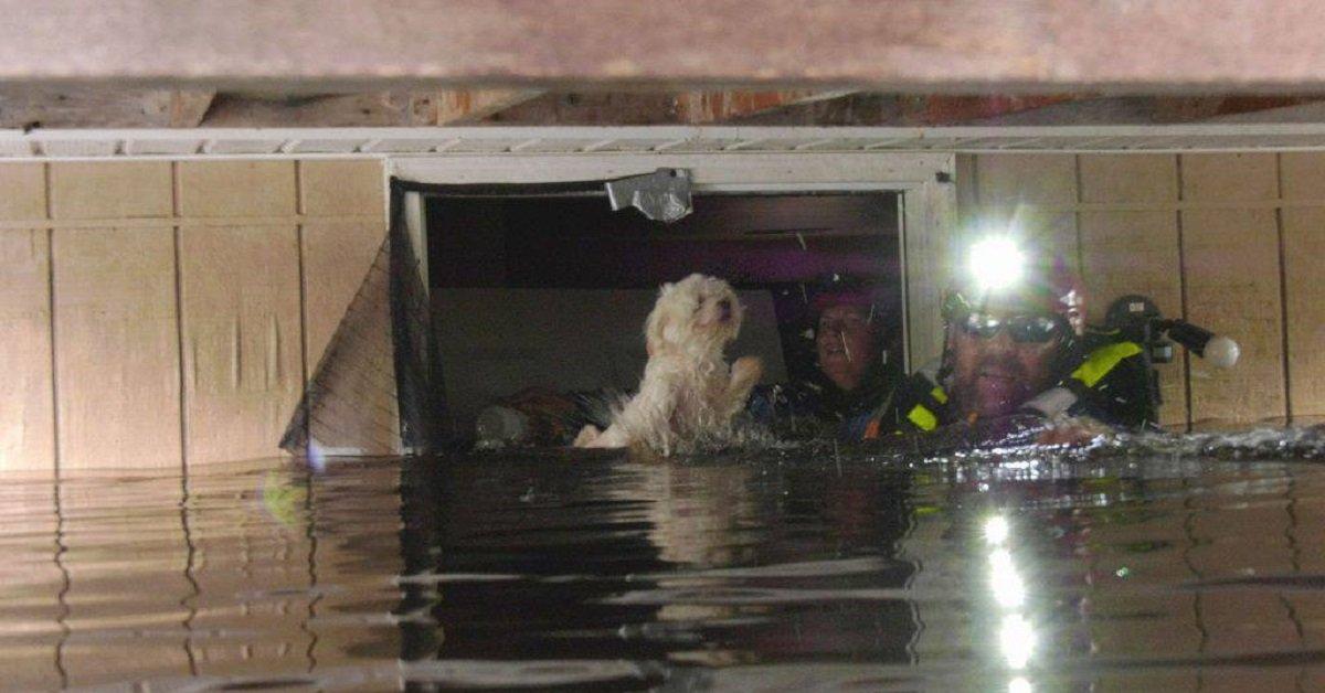 cane-sopravvissuto-uragano