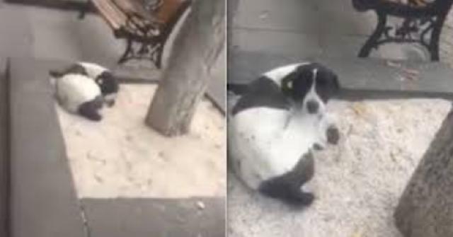 cani-che-rivedono-i-padroni-dopo-tanto-tempo-dopo-3-anni-lincontro-per-strada
