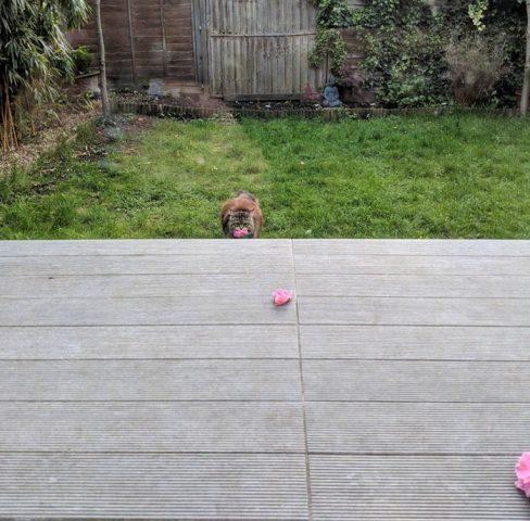 quello-che-viene-fatto-a-Rosie-appena-si-trasferisce-nella-nuova-casa 2