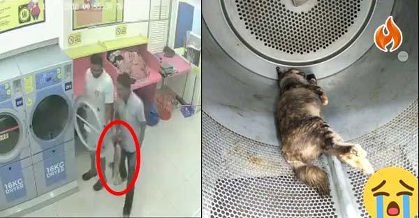 3-ragazzi-uccidono-una-gattina-incinta 3