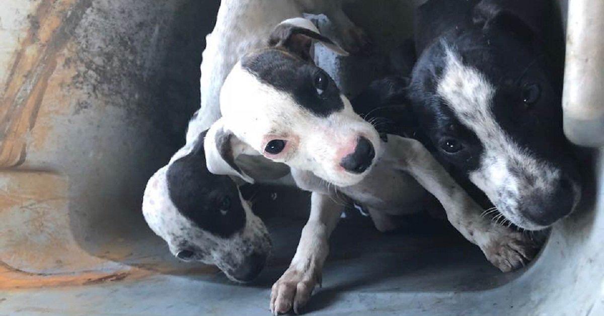 cuccioli-abbandonati-e-affamati