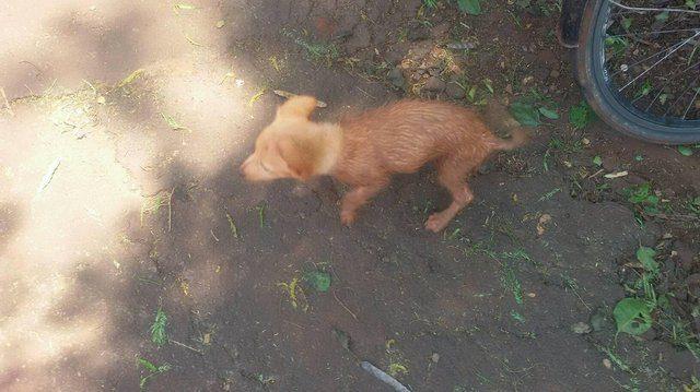 cucciolo-salvato