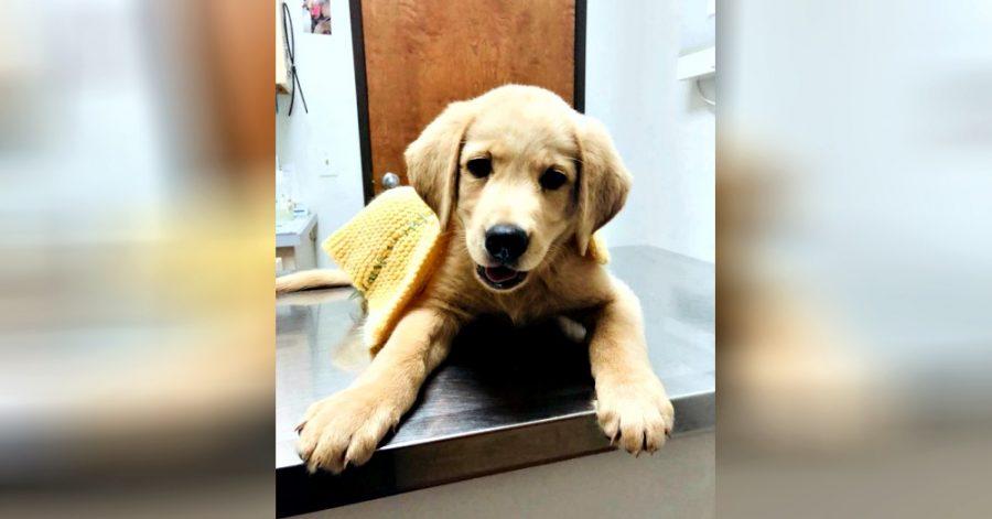 riabilitazione cane