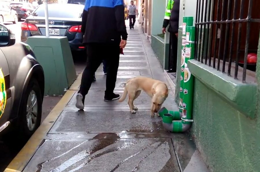 Distributori di cibo e acqua per cani randagi