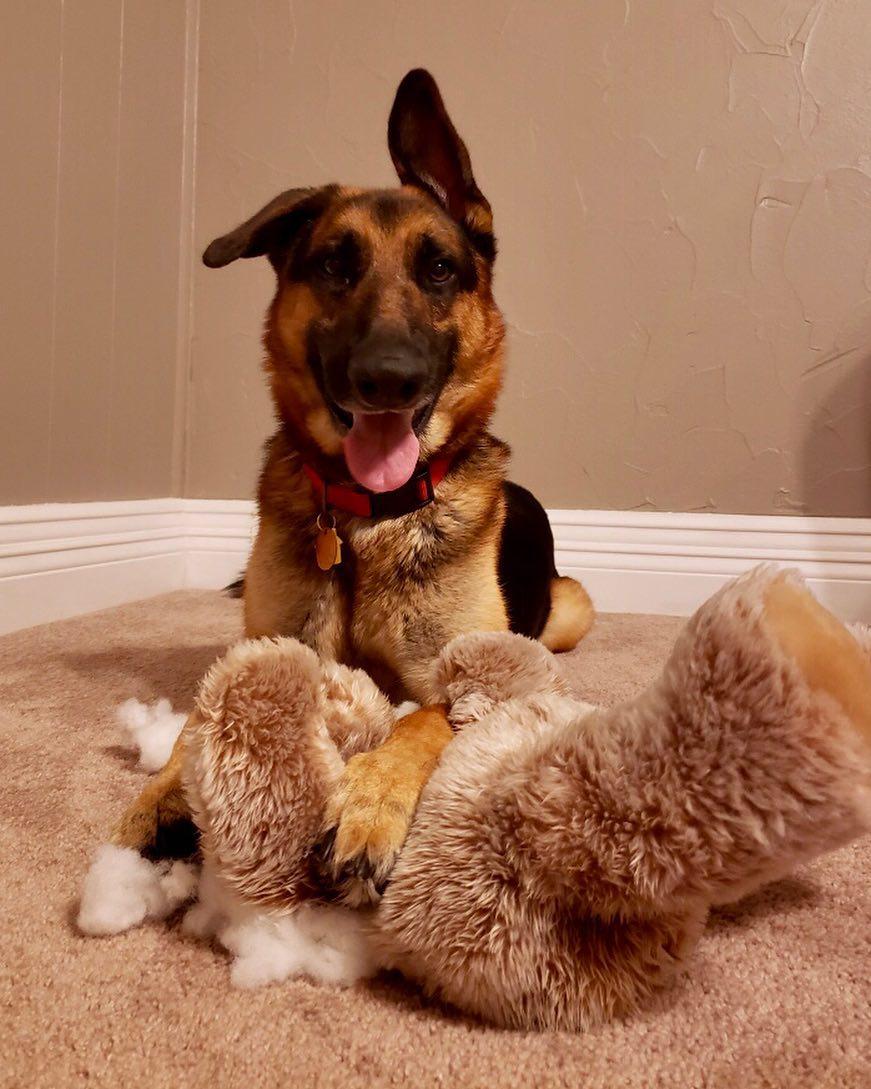 giochi per il cane