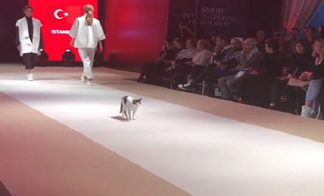 Gatto alla sfilata di moda a Istanbul