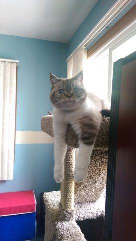 gatto-alto