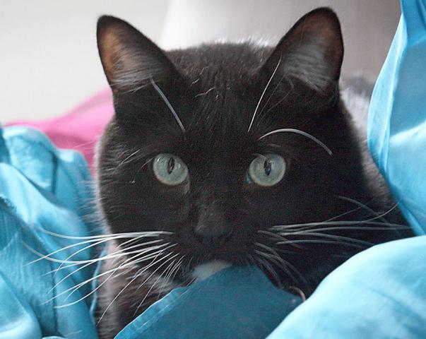gatto-salva-veterano-che-vuole-togliersi-la-vita2