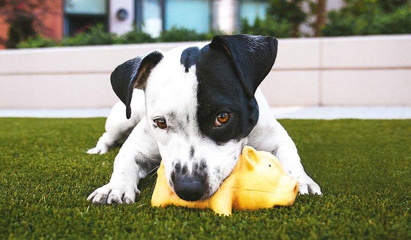 giochi-da-fare-con-il-cane