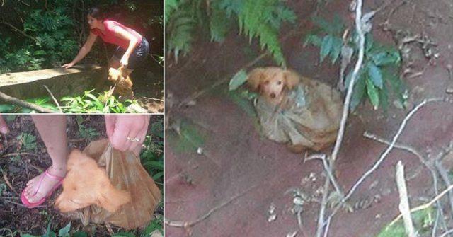 il-cucciolo-abbandonato-in-un-bosco