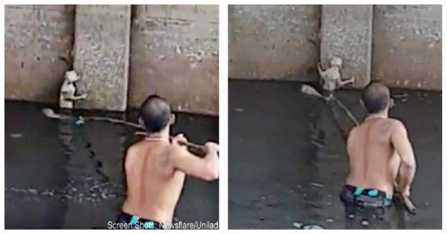 il-salvataggio-del-gatto-nel-fiume
