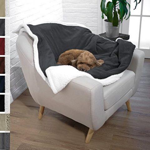 il-tuo-cane-quando-dorme-si-rannicchia-su-se-stesso