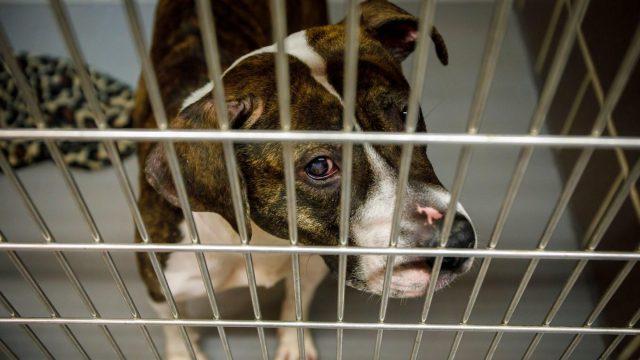 la-triste-vita-dei-cani-nel-rifugio1