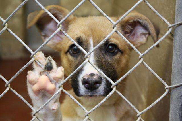 la-triste-vita-dei-cani-nel-rifugio3