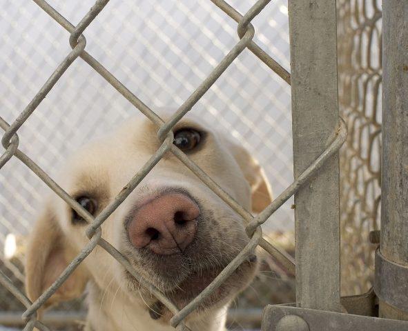 la-triste-vita-dei-cani-nel-rifugio4