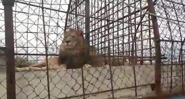 la-liberazione-degli-animali-nello-zoo-in-Albania
