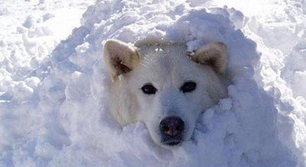lo-sconosciuto-vede-il-cane-tremare-e-decide-di-intervenire12