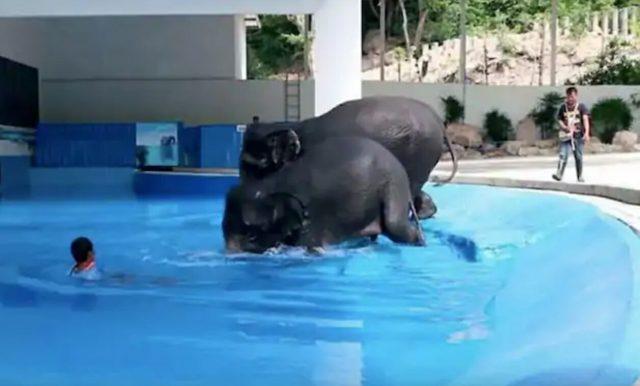 lo-show-degli-elefanti-in-thailandia