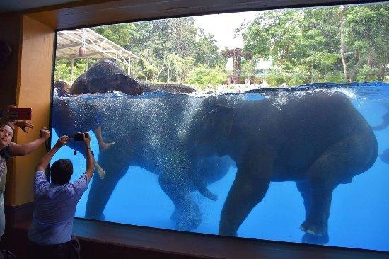 lo-show-degli-elefanti-in-thailandia2