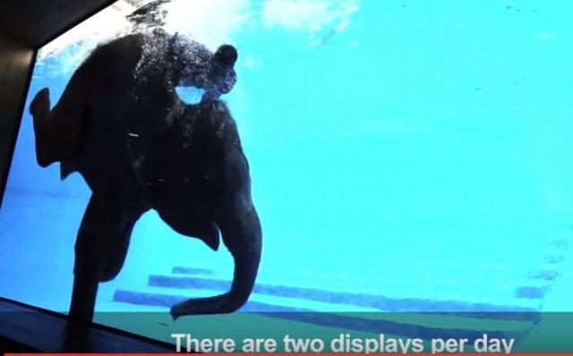 lo-show-degli-elefanti-in-thailandia3