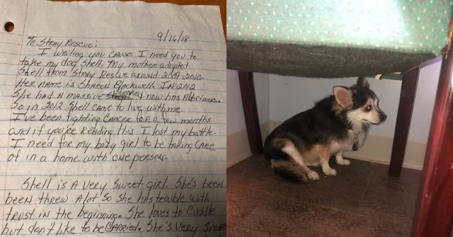malata-terminale-cerca-casa-per-il-suo-cane