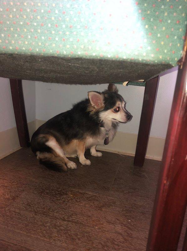Donna malata terminale cerca casa per il suo cane