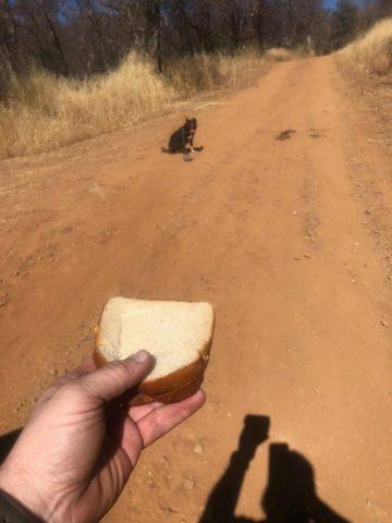 martin-con-laiuto-di-un-cane-salva-la-vita-di-quelluomo1