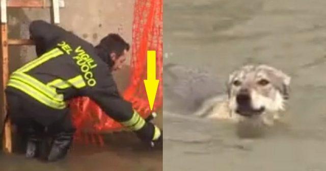 salvati-i-cani-finiti-nel-canale-dei-pescatori