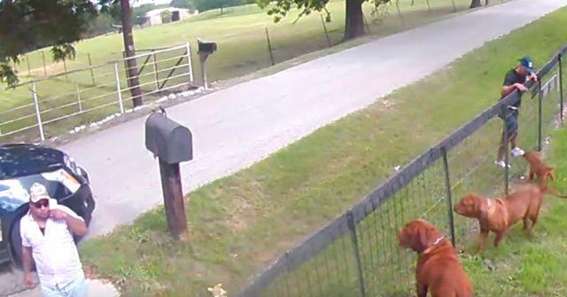 telecamere-di-sicurezza-riprendeno-due-uomini-che-rubano-un-cucciolo-