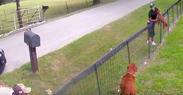 telecamere-di-sicurezza-riprendeno-due-uomini-che-rubano-un-cucciolo-1