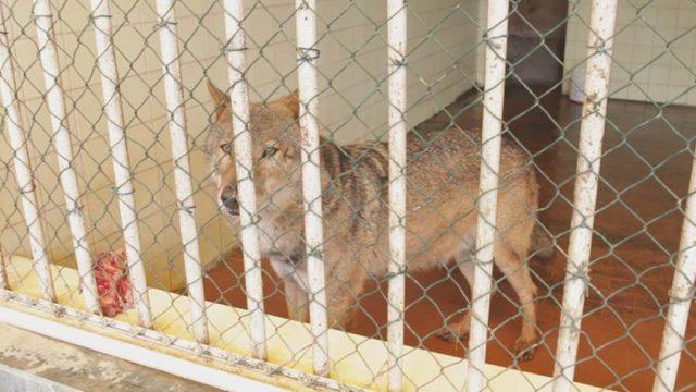 la-liberazione-degli-animali-nello-zoo-in-Albania 2