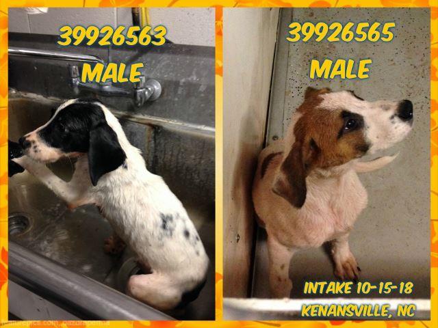 tredici-cani-saranno-sottoposti-ad-eutanasia-4