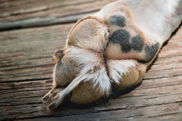 tredici-cani-saranno-sottoposti-ad-eutanasia-6