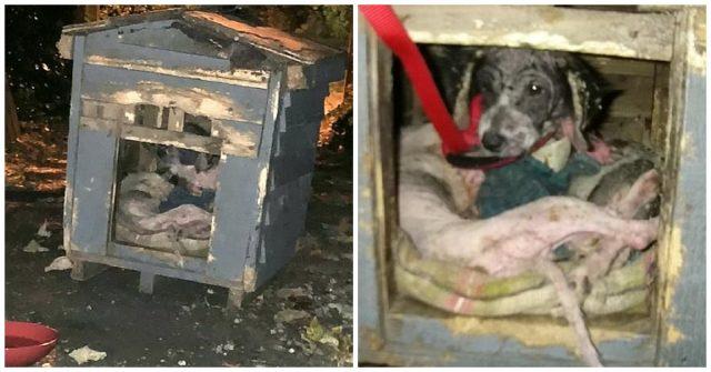 un-cane-emaciato-rifiuta-laiuto-dei-volontari