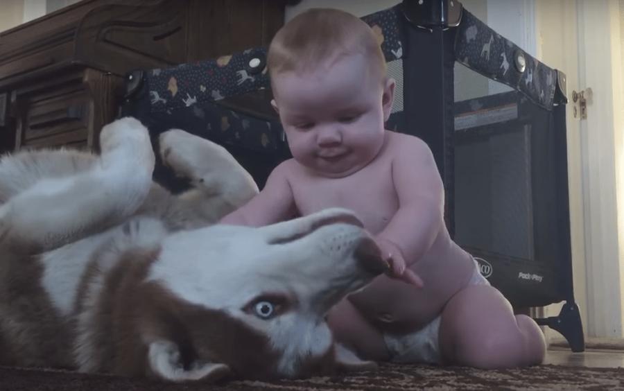 video-del-cane-e-del-bambino