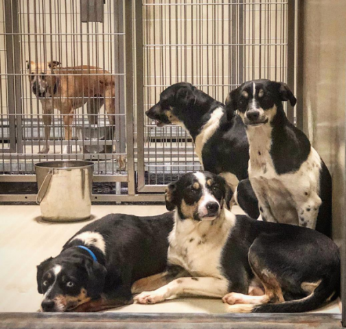 zach-e-stato-miracolato-dai-suoi-tre-cani3